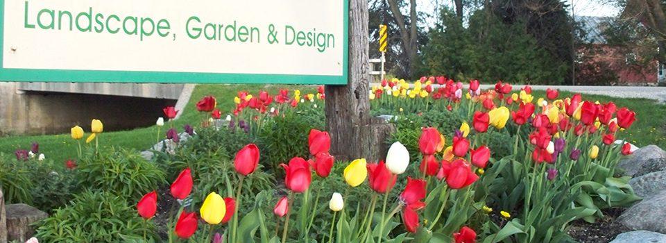 Sign-with-tulips-closeup-960